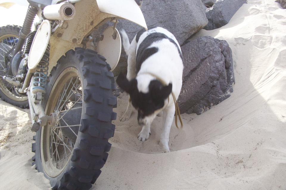 How To Get A Dog To Stop Chasing Bikes
